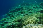 72_Complete_coral_cover_in_Hagrandhoo_North-Gaafu