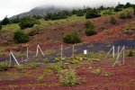 33_Endemic_Plants_Site_where_the_last_endemic_plants_are_protected_with_a_fence