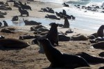09_Galapagos_sea_lion_beach_in_Baquerizo_Moreno_the_capital_of_Galapagos