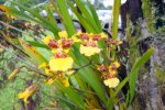 03_Orchids_at_rainbow_falls
