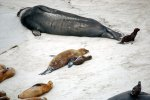 09_There_were_also_sealion_pups_on_this_beach